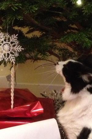 Cat V Christmas