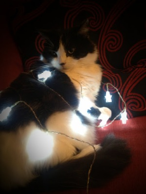 Christmas Light Cat