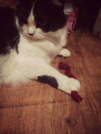 Edited Cat Toy 5